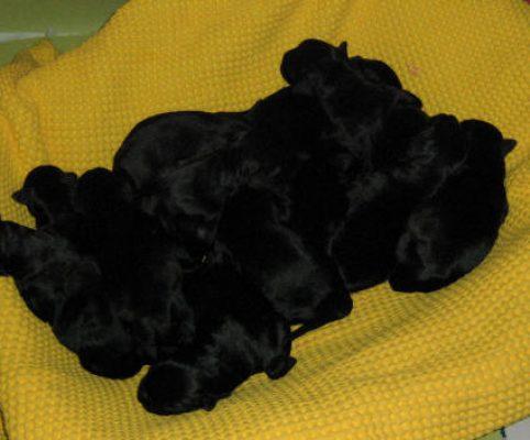 Cucciolata F cuccioli